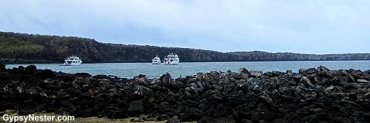 Darwin's Bay, Genovesa Island, Galapagos Island, Ecuador