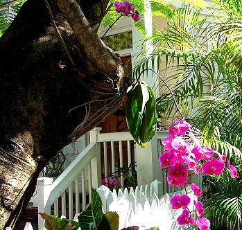 Bugalow garden