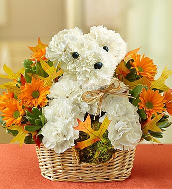 Dog Flowers!