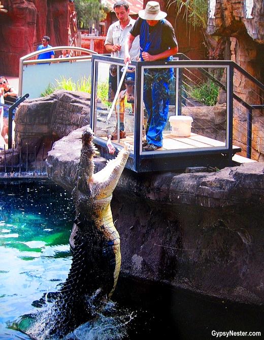 David feeds a crocodile at Dreamworld, Gold Coast, Queensland, Australia