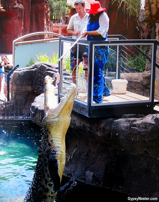 Veronica feeds a crocodile at Dreamworld, Gold Coast, Queensland, Australia