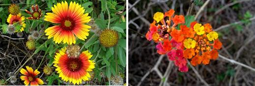 Flora of Grand Isle