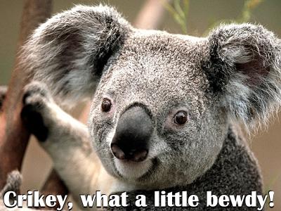 Crikey! What a little bewdy!