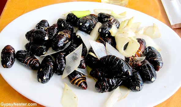 Silkworms as food?