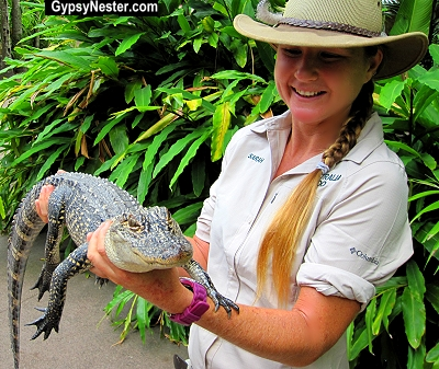 A baby crocodile at Steve Irwin's Australia Zoo in Queensland