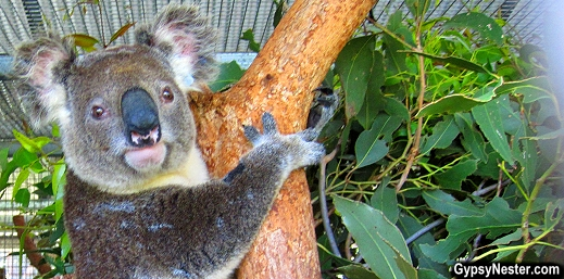 Australia Zoo Wildlife Hospital, Queensland