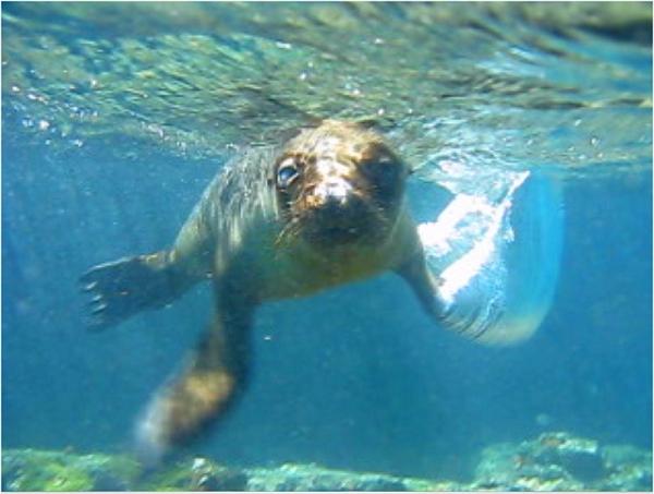Sweet baby sea lion underwater