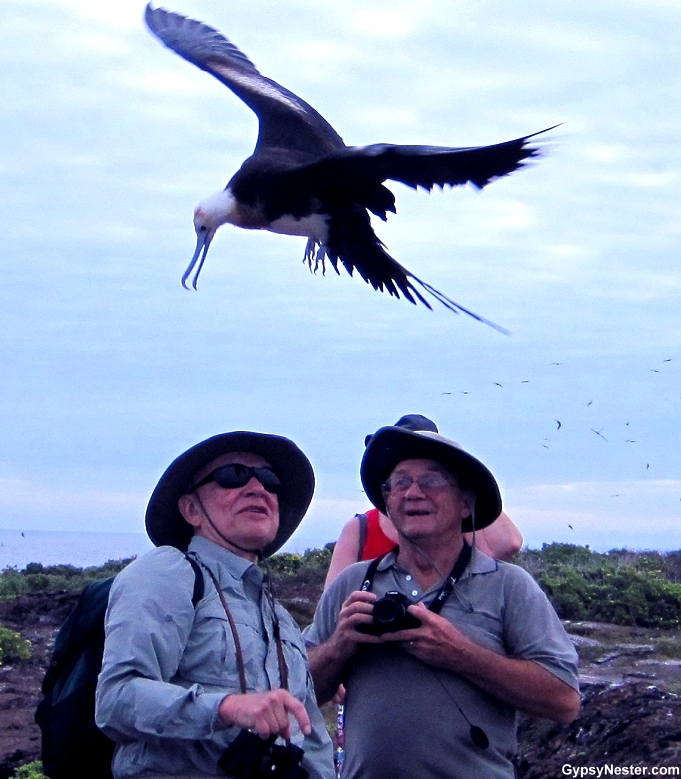 Galapagos Bird Island Duo