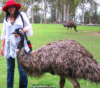 Veronica among the emus at the Lone Pine Koala Sanctuary in Brisbane, Queensland, Australia