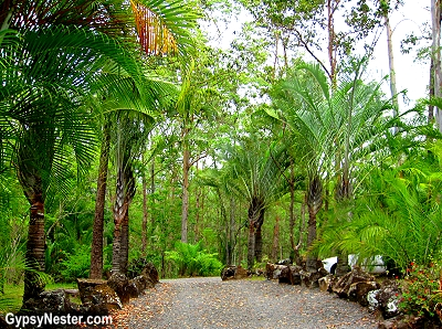 The road to Glasshouse Gourmet Snails in the Hinterlands of Queensland, Australia