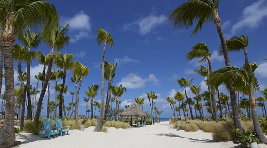 Palm lined sand in Aruba