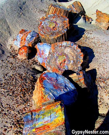A tree in the Petrified Forest National Park in Arizona - beautiful!