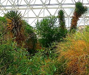 Desert Biome in Biosphere 2