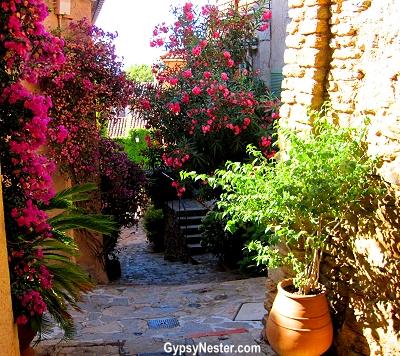 Flora in Bormes-les-Mimosas, Provence, France
