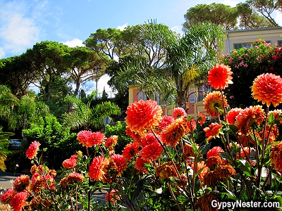 The flowers of Bormes-les-Mimosas, Provence, France