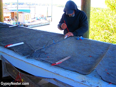 Loading clams into mesh bags in Cedar Key, Florida