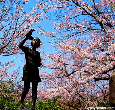 Cherry Blossoms flower outside of Nagasaki's Atomic Bomb Museum