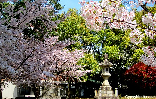 Cherry Blossoms flower outside of Nagasaki's Ground Zero Park