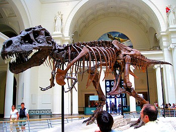 Sue, the Tyronnosaurus at The Field Museum