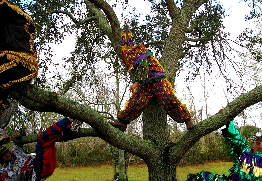 Mardi Gras in the trees
