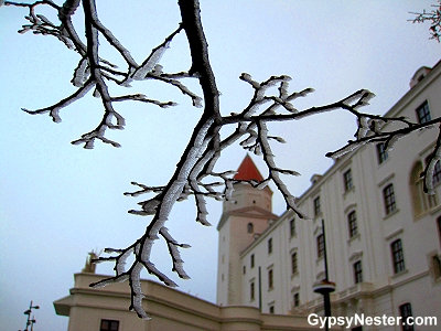 At the Bratislava Castle. Up here the fog is freezing on to everything it touches, making icy art out of the trees