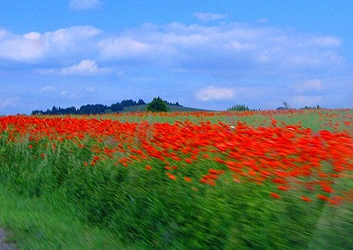 Poppy field in Czech Countryside
