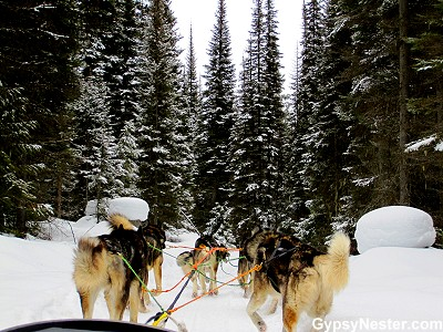 Dog sledding through Stillwater State Forest in Montana