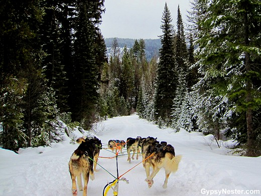 Dog sledding through Stillwater State Forest