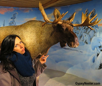 Still don't believe in moose! At the Ski Jump Museum in Oslo, Norway