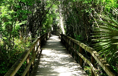 Big Cypress Bend Boardwalk at Fakahatchee Preserve State Park