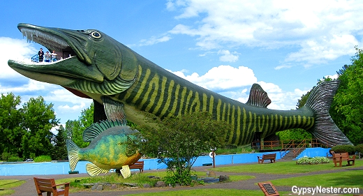 The giant fiberglass muskie outside of the Fresh Water Fishing Hall of Fame in Hayward, Wisconsin