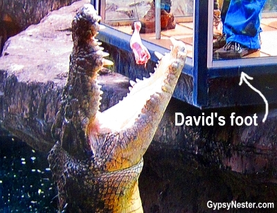 David feeds a crocodile at Dreamworld, Gold Coast, Queensland, Australia