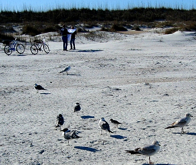 Birds and bikes on the beach