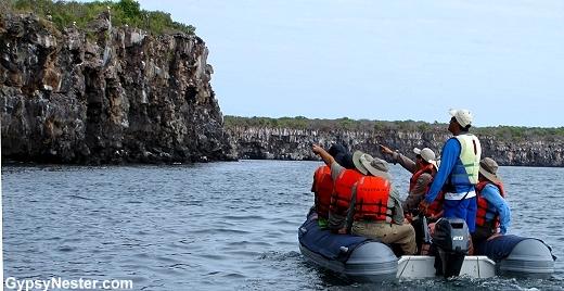Zodiac ride along the cliffs of Genovesa, Galapagos Islands