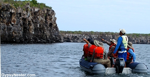 Zodiac ride along the cliffs of Genovesa, Galapagos Islands
