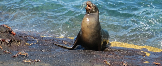 Sea Lion in the Galapagos Islands