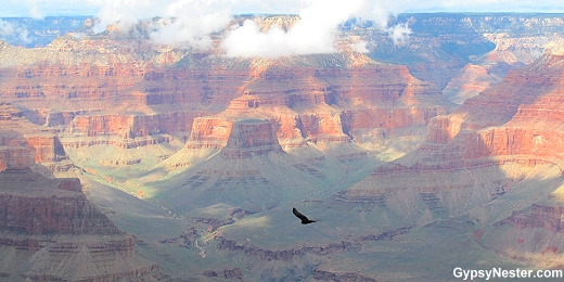 A hawk flies over the canyon