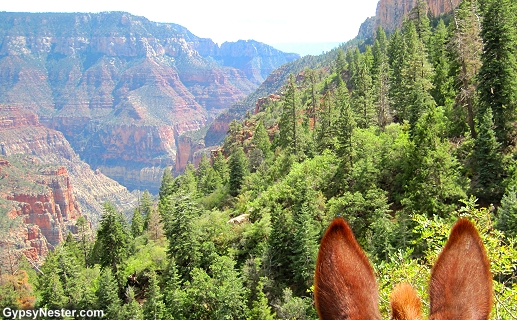 The Grand Canyon on a mule!
