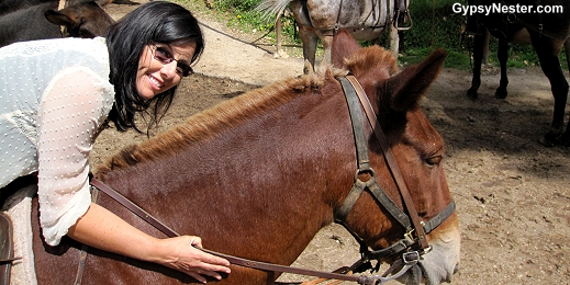 Veronica and her new Grand Canyon mule buddy, Slim