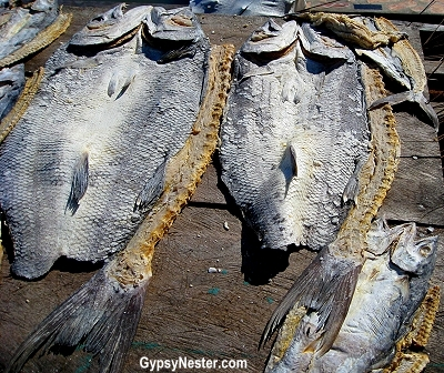 Saltfish drying in the sun in Livingston, Guatemala