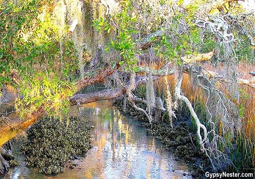 Oyster beds on Sea Islands of South Carolina