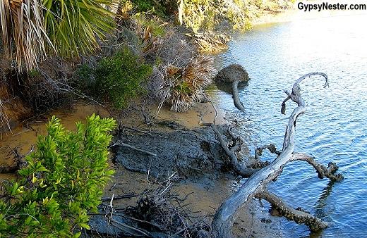 The Sea Islands of South Carolina