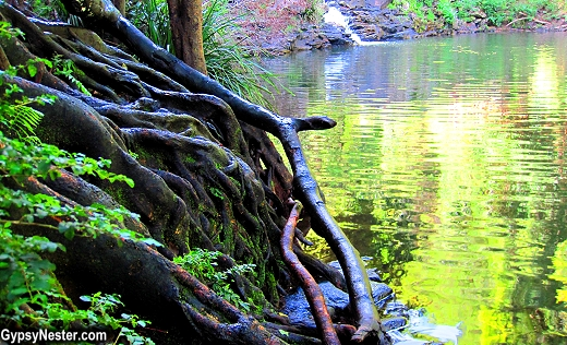 Waterfall and tree roots on our bush walk near at Spicers Tamarind Resort in the Hinterlands of Queensland Australia