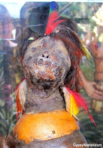 The Shuar people of Ecuador dabbled in head shrinking.