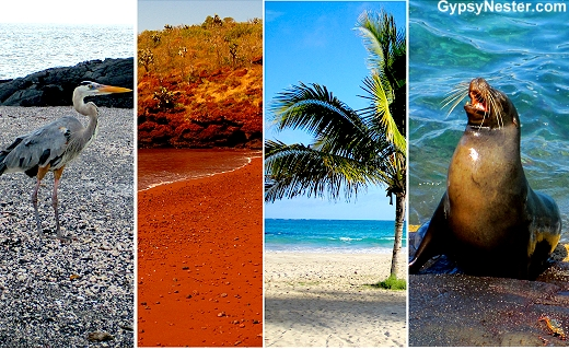 The Galapagos Islands have many colors of beaches!