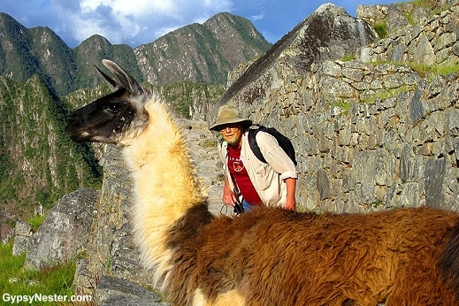 David tries to sweet talk a llama out of our way at Machu Picchu