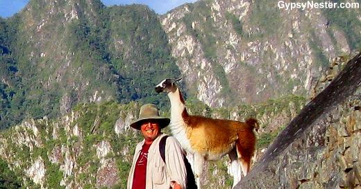 Llama Photo Bomb!