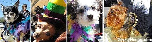 Mardi Gras Dog Parade, Lafayette Louisiana