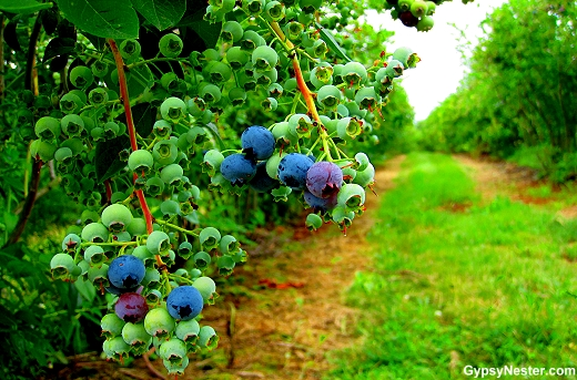 Blueberry Acres in Nova Scotia