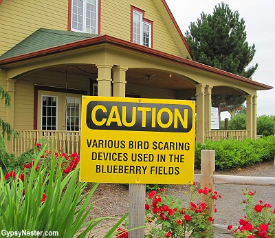 Blueberry Acres in Nova Scotia has come up with innovative ways to keep the birds out of the bushes